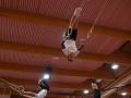 Swissrings Training Gymotion 157